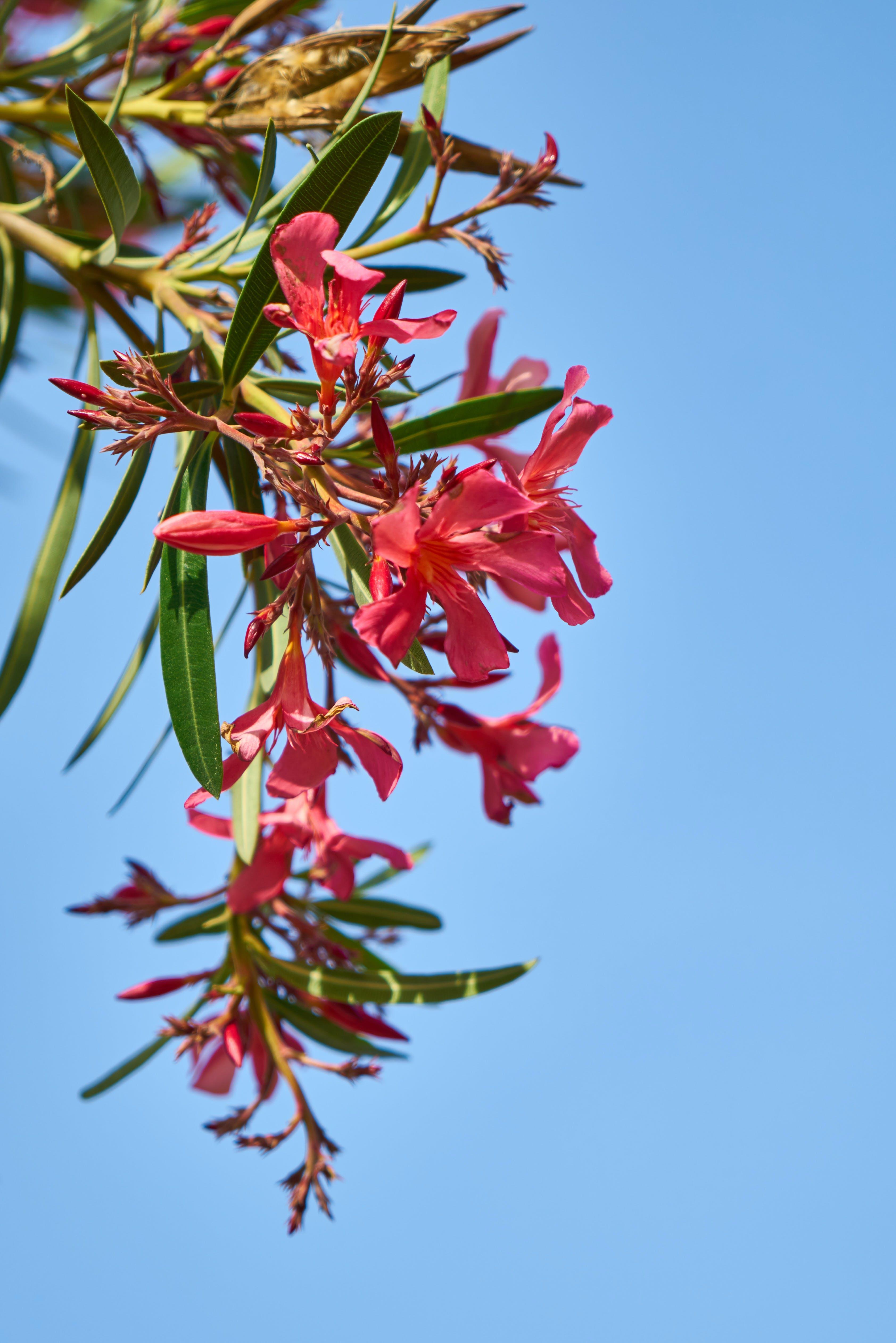 Fotobanka sbezplatnými fotkami na tému botanický, červená, detailný záber, exteriér