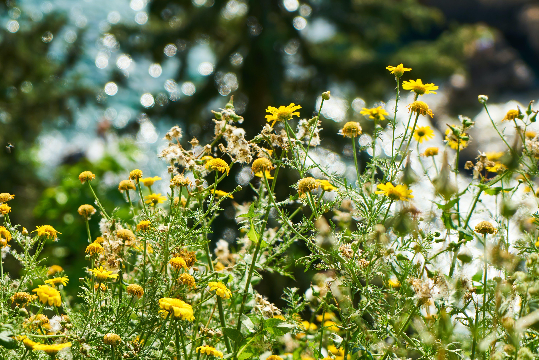 Fotobanka sbezplatnými fotkami na tému botanický, detailný záber, exteriér, farby