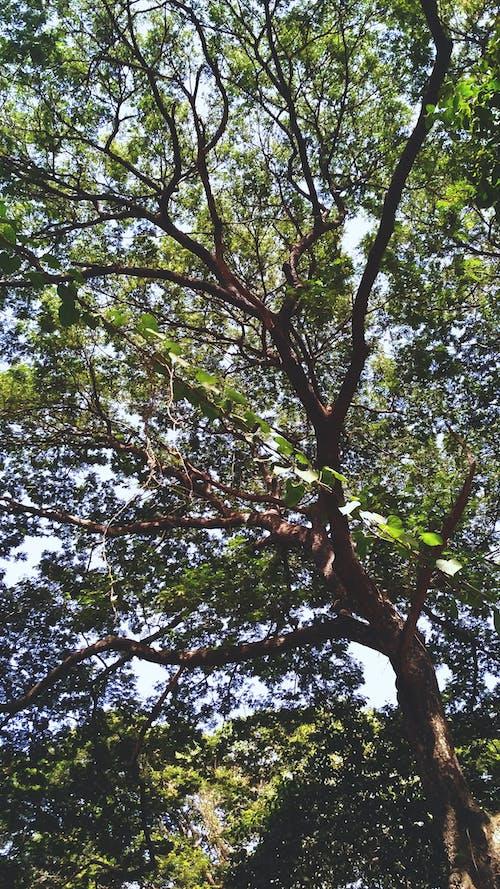 夏天, 天性, 樹, 樹木 的 免費圖庫相片