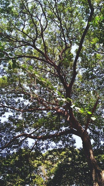 fa, fák, nyár