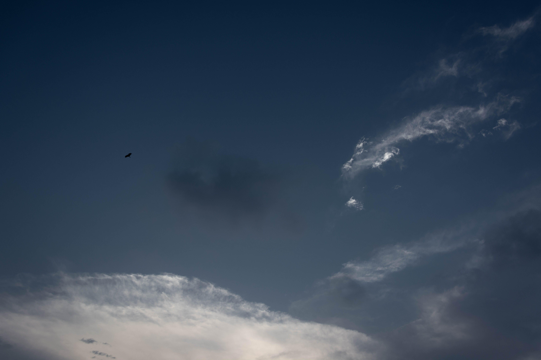 Kostnadsfri bild av 35mm, blå himmel, dramatisk himmel, fågel