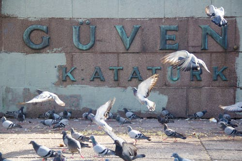 Immagine gratuita di ankara, atatürk, piccione, piccioni