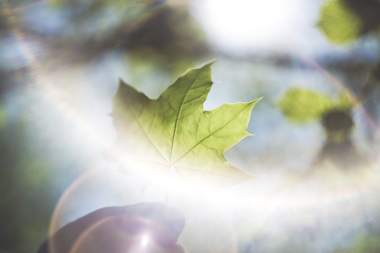 Ảnh lưu trữ miễn phí về ánh nắng mặt trời, ánh sáng ban ngày, ánh sáng mặt trời, cây phong