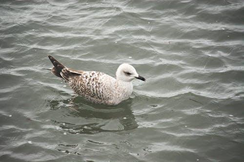 Free stock photo of animalier, eau, faune