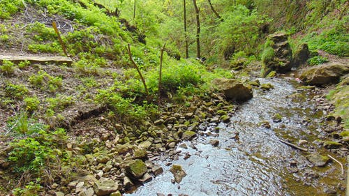 Gratis arkivbilde med elv, natur, skog, vann