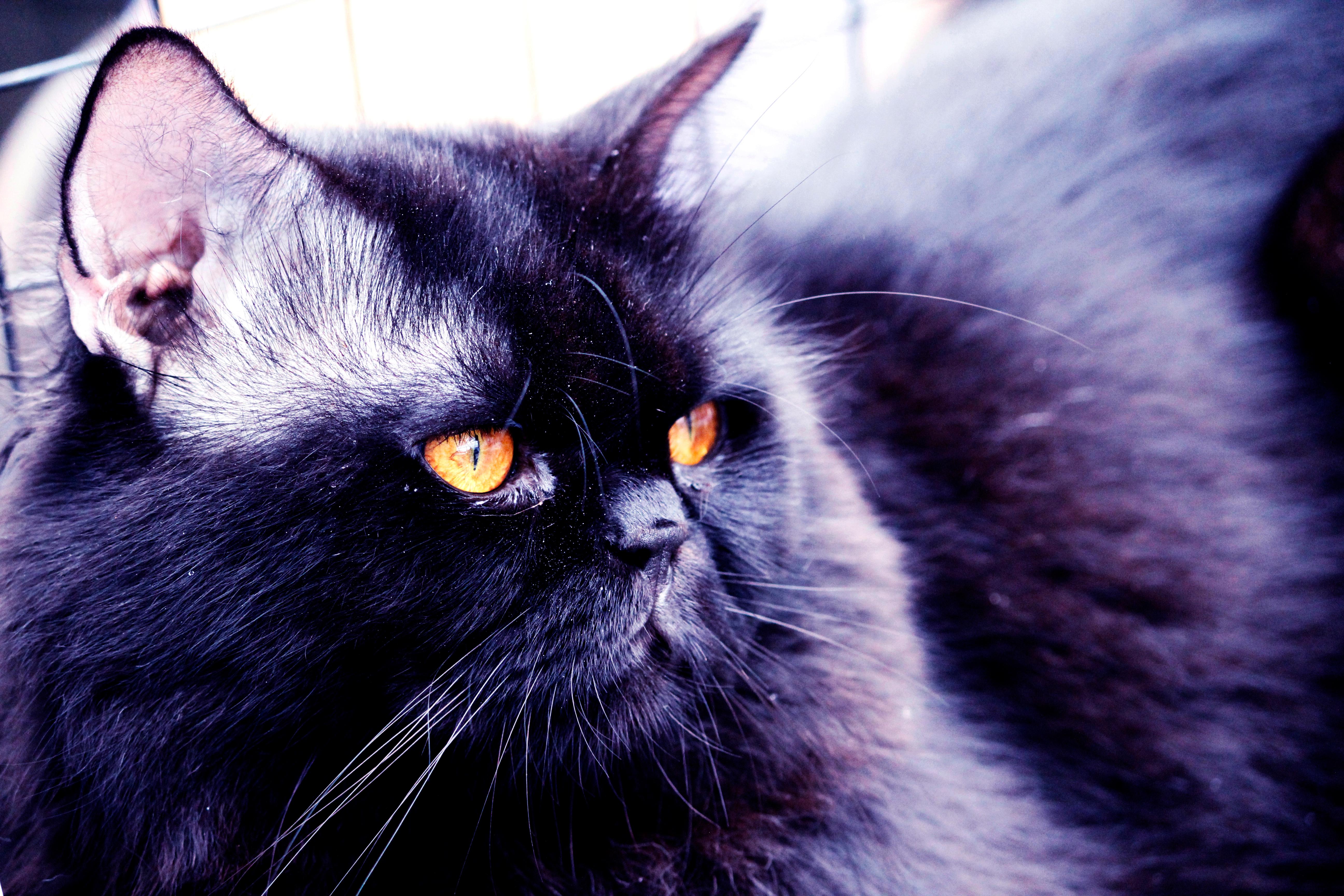 sledovat zdarma černá kočička