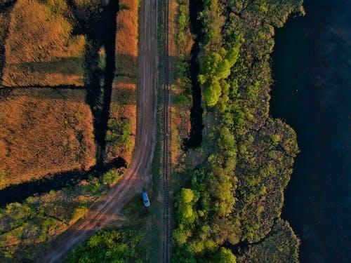 Бесплатное стоковое фото с автомобиль, вода, деревья, дневной свет