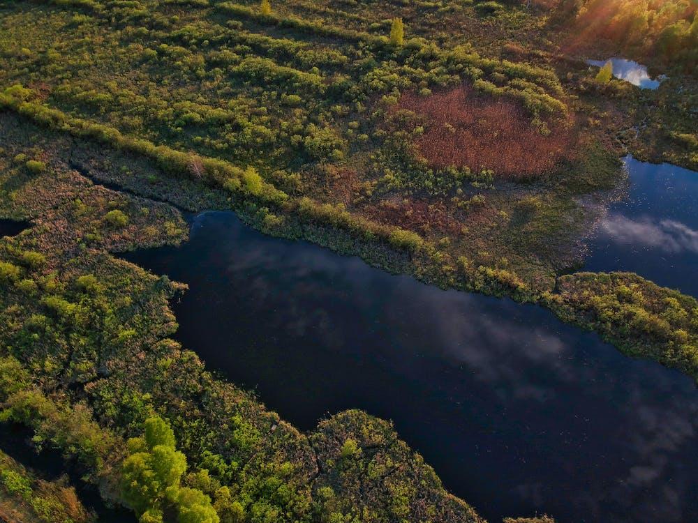 drónfelvétel, erdő, esés