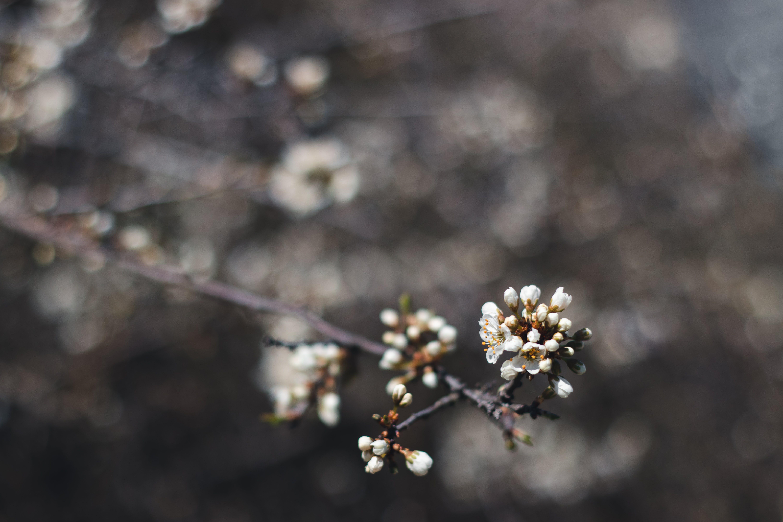 Kostnadsfri bild av blomma, fjäder