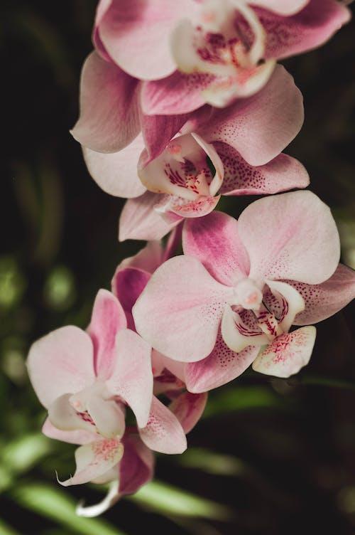 Foto profissional grátis de flores, flores cor-de-rosa, flores da primavera, mola