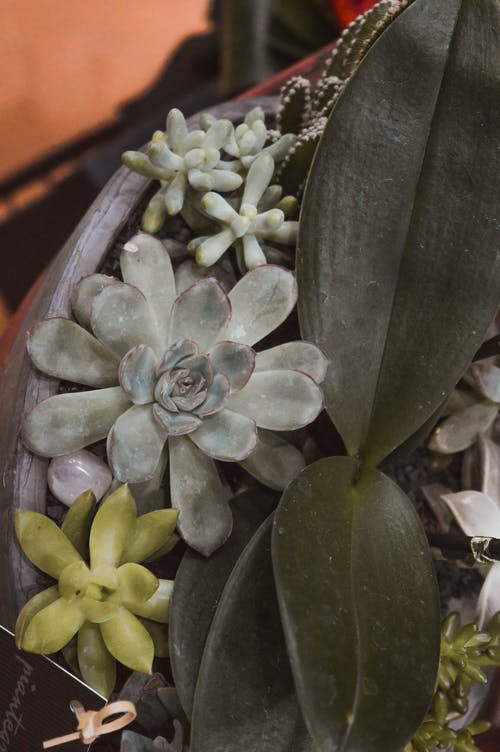 Foto profissional grátis de mola, planta suculenta, plantas, plantas suculentas