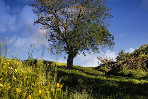 Photos gratuites de arbre, brillant, campagne, ciel