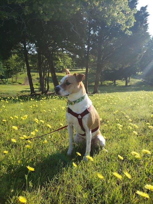 つぶやき, 犬, 自然, 花畑の無料の写真素材