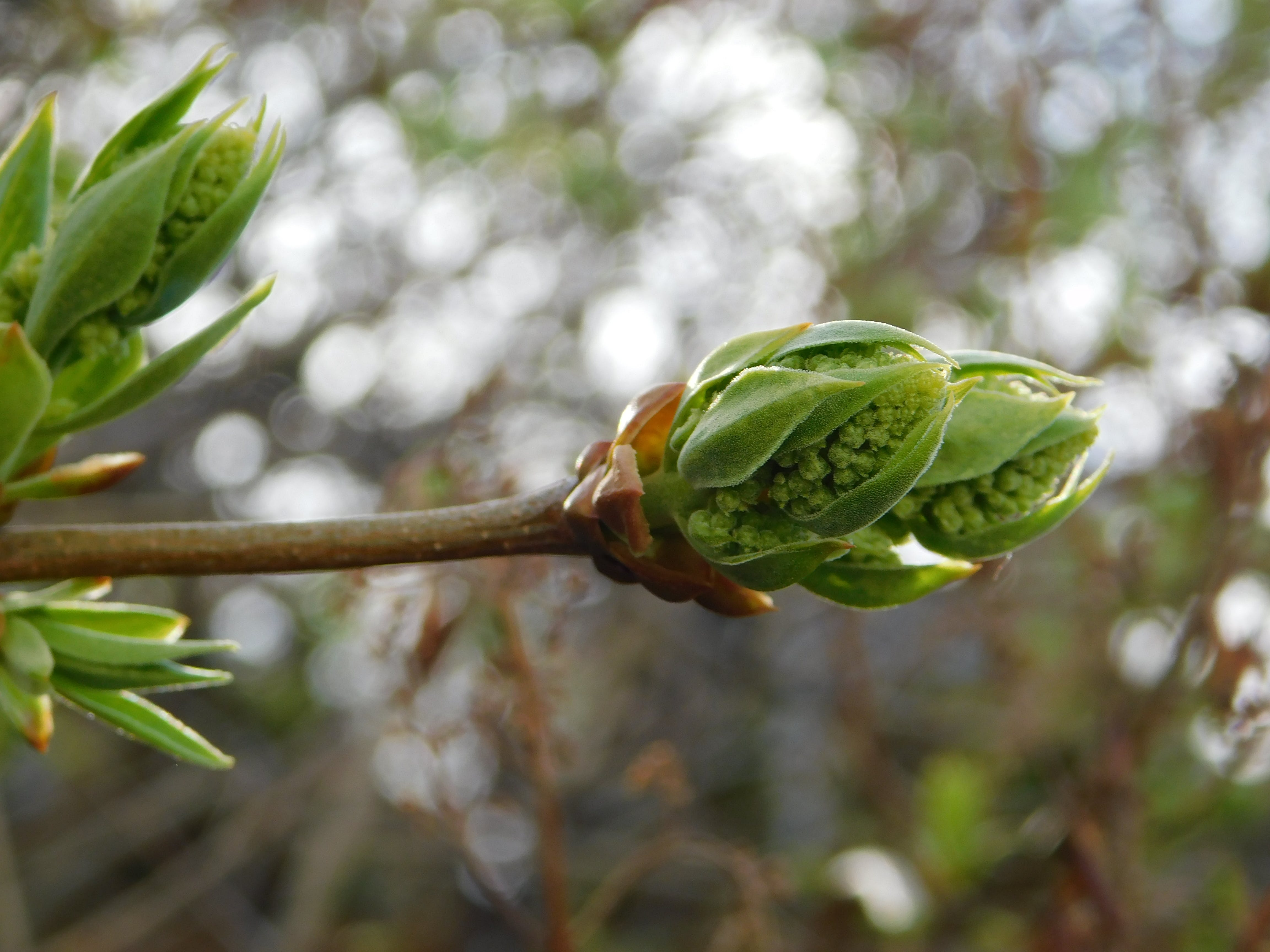 Fotos de stock gratuitas de primavera 2019