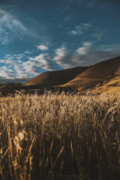 ファーム, フィールド, 丘, 作物の無料の写真素材