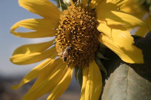 4k 바탕화면, 곤충, 꽃, 노란색의 무료 스톡 사진