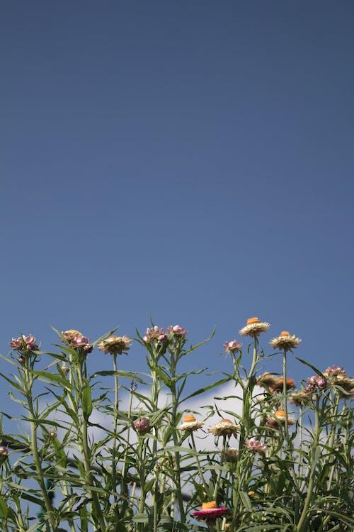 4k 바탕화면, 구름, 꽃, 나무의 무료 스톡 사진