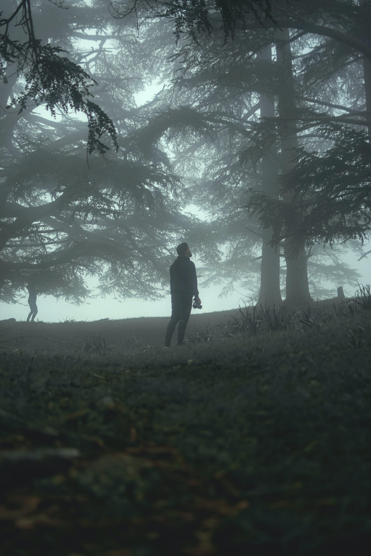 adam, ağaçlar, çevre, çim içeren Ücretsiz stok fotoğraf