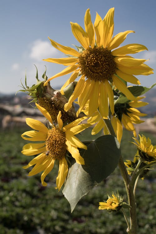 4k 바탕화면, 곤충, 꽃, 녹색의 무료 스톡 사진