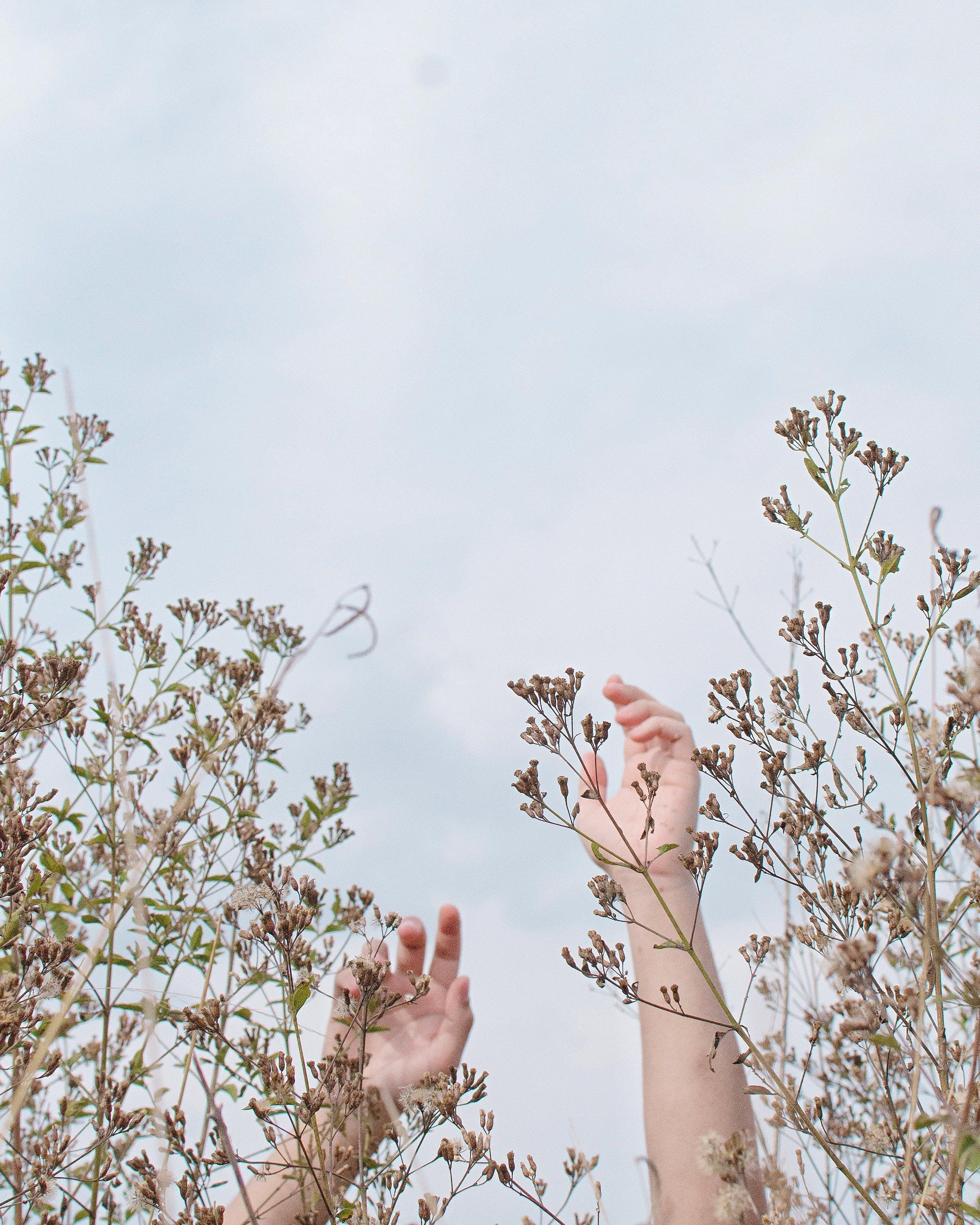 Gratis lagerfoto af himmel, hænder, plante