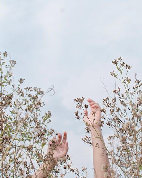 Ilmainen kuvapankkikuva tunnisteilla kädet, kasvi, taivas