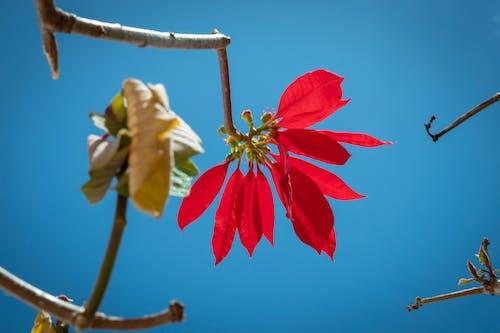 Photos gratuites de #la nature, #outdoorchallenge, couleur, se détendre