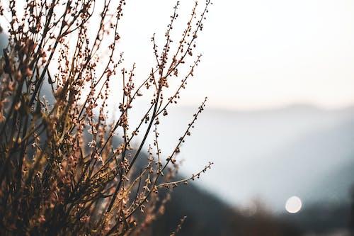 天性, 廠, 自然背景 的 免費圖庫相片
