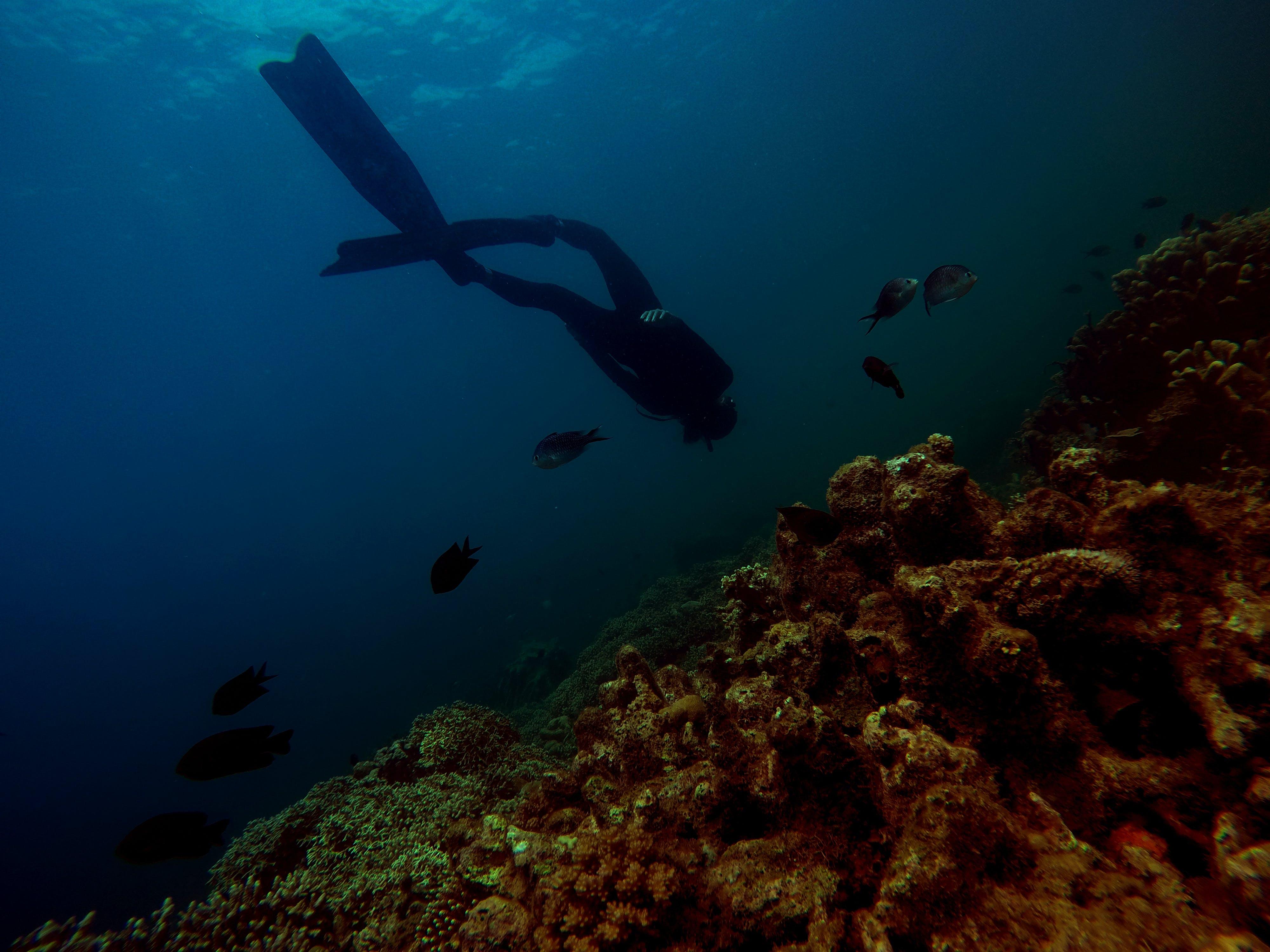 Základová fotografie zdarma na téma hluboký, korály, mokrý, osoba