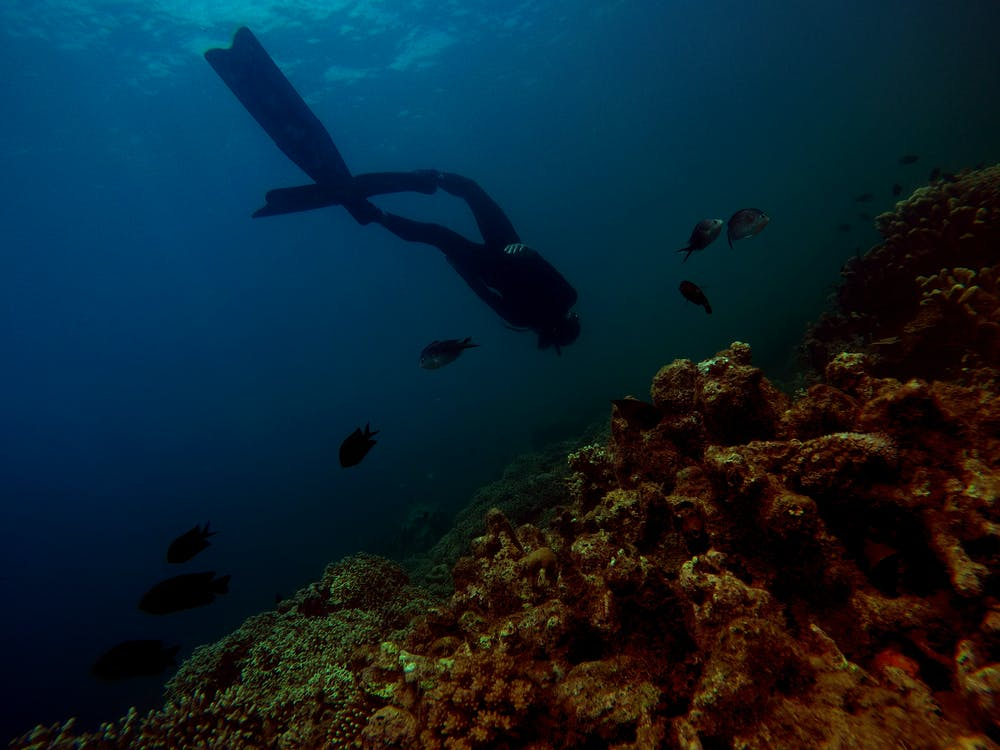 bơi lội, cá, cuộc sống biển