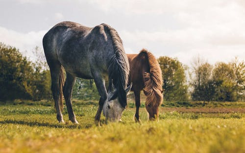 Foto d'estoc gratuïta de bellesa a la natura, camp, cavalls, eqüestre