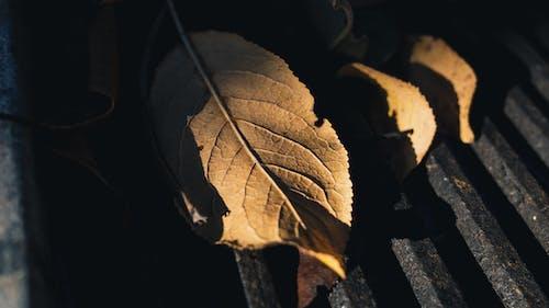 가을, 건조한, 계절, 그림자의 무료 스톡 사진