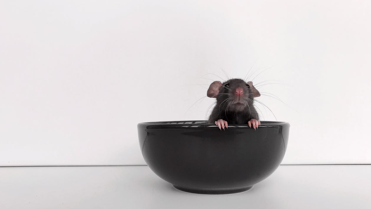 animal, bowl, dishes