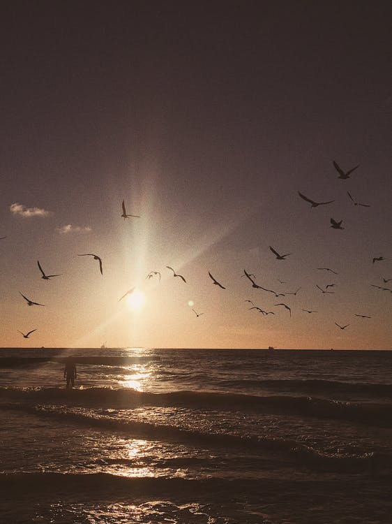 inspiracja, mewy, morze