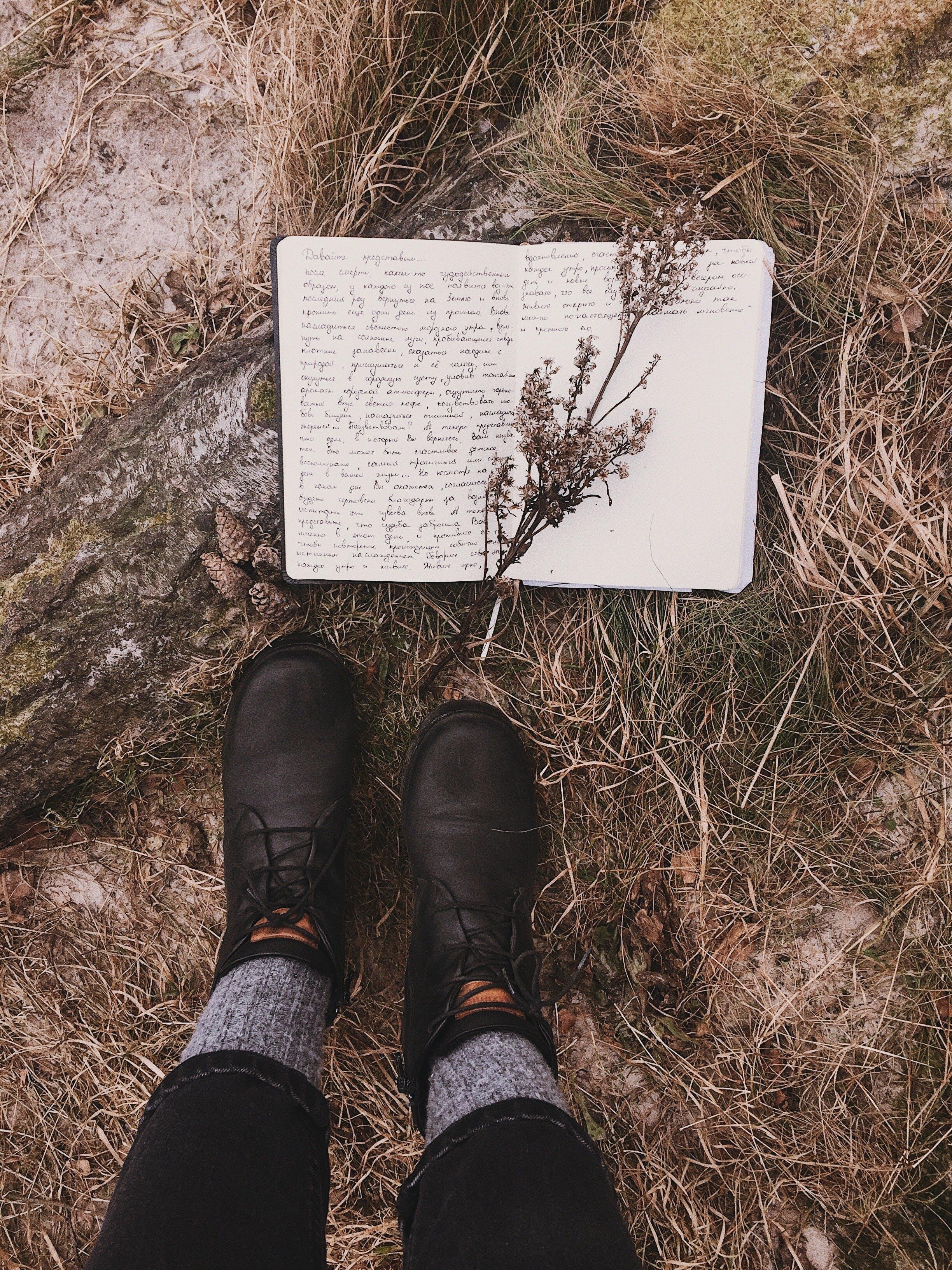 Gratis lagerfoto af Ben, dagslys, efterår, falde