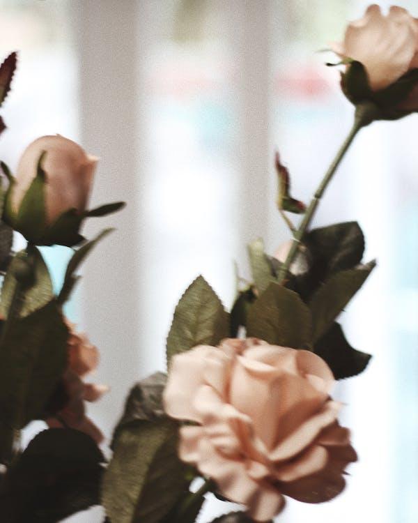 cảm hứng, hoa, hoa hồng