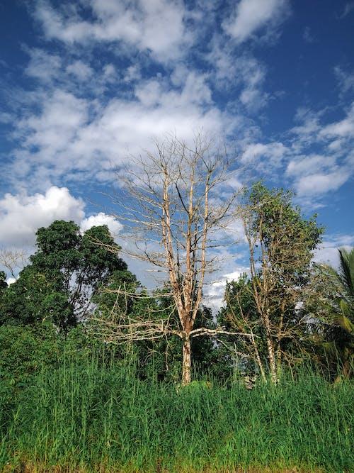 #自然の無料の写真素材