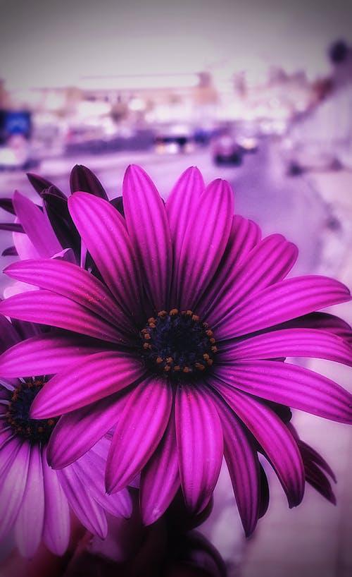 Free stock photo of artificial flowers, beautiful flower, purple