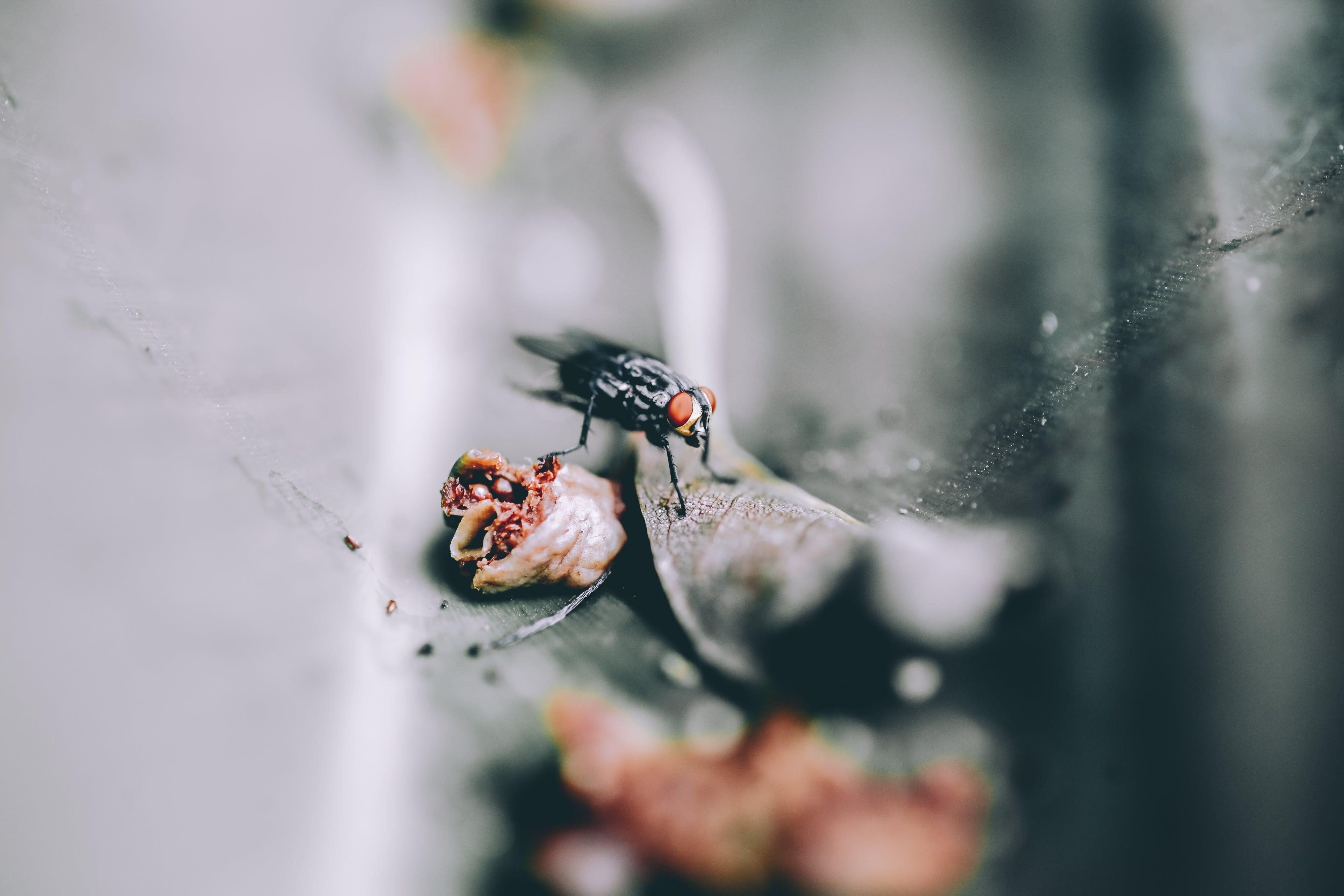 Základová fotografie zdarma na téma brouk, drobný, hmyz, látat