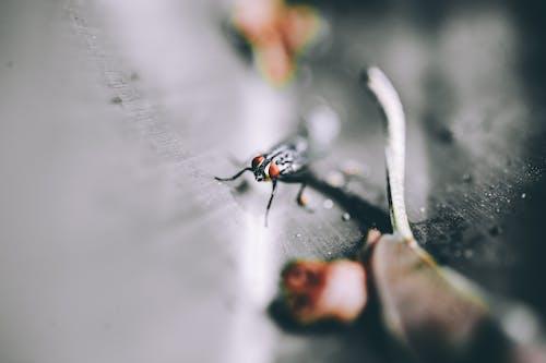 Kostenloses Stock Foto zu bug, fliege, insekt, klein