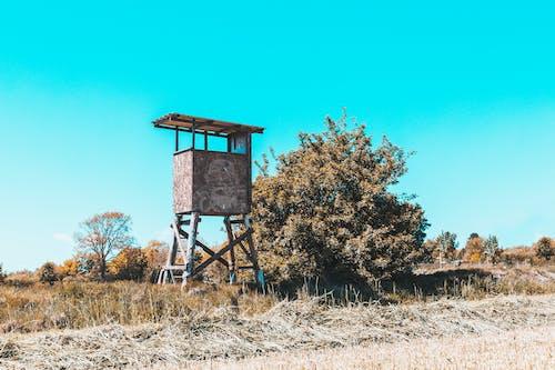 Δωρεάν στοκ φωτογραφιών με αγροτικός, αρχιτεκτονική, αρχιτεκτονικός, βοτανικός