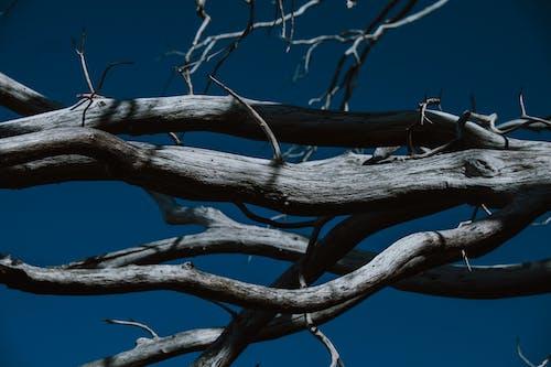 Безкоштовне стокове фото на тему «блакитне небо, візерунок, Гілка дерева, гілки»