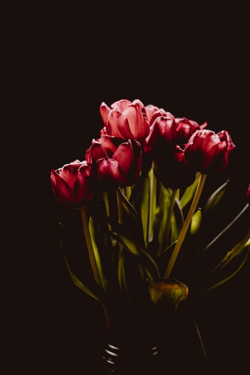 คลังภาพถ่ายฟรี ของ การจัดดอกไม้, กำลังบาน, ช่อดอกไม้, ดอกทิวลิป