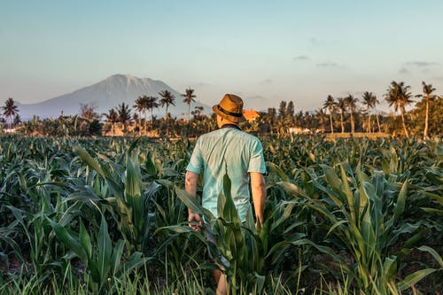 Gratis stockfoto met akkerland, Azië, Bali, berg