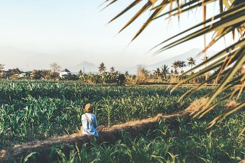 Fotobanka sbezplatnými fotkami na tému agung, Ázia, človek, farma