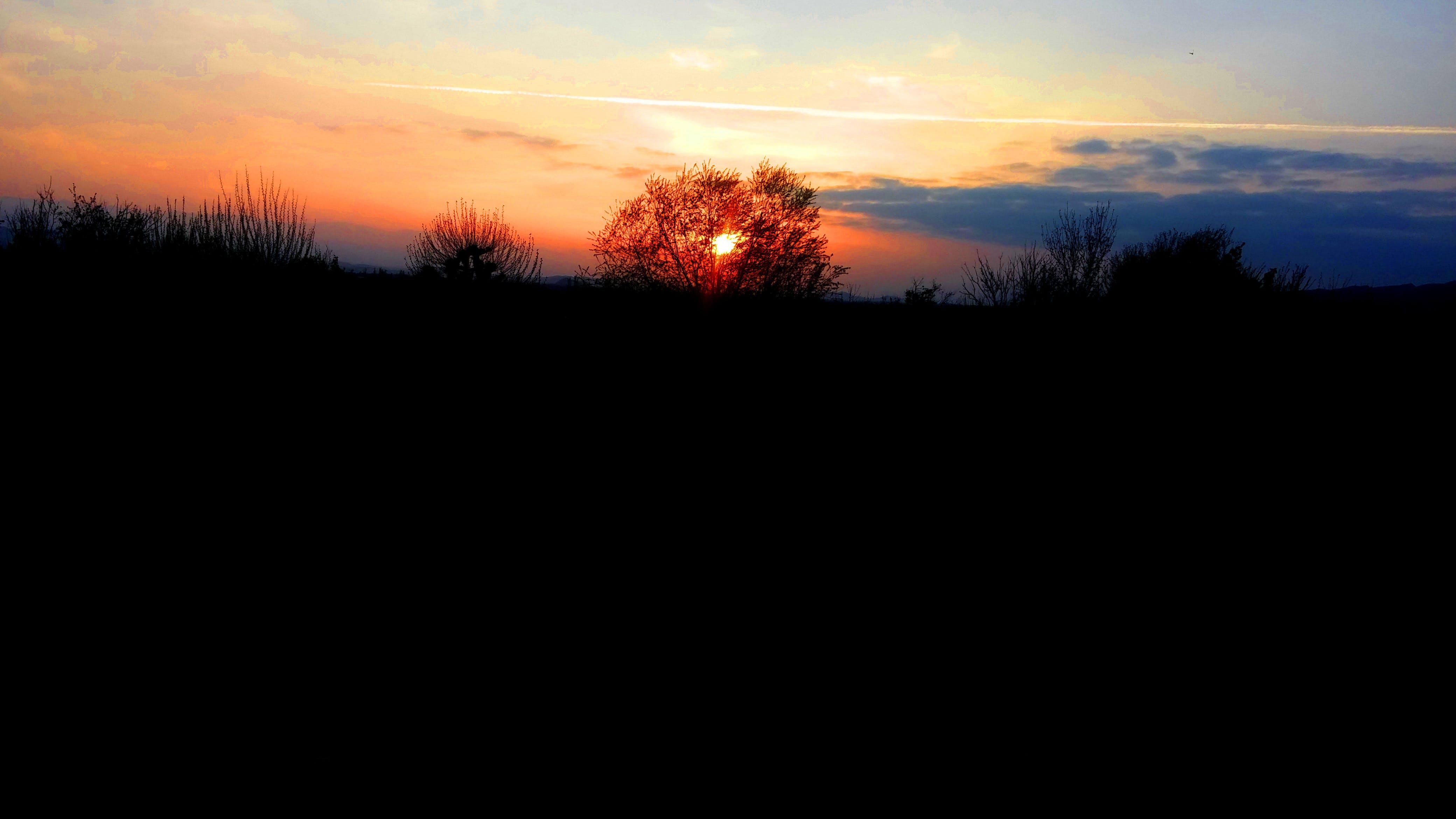 Foto d'estoc gratuïta de arbre, capvespre, cel, fosc