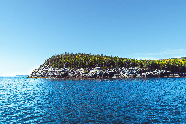 Foto d'estoc gratuïta de arbres, bosc, boscos, Canadà