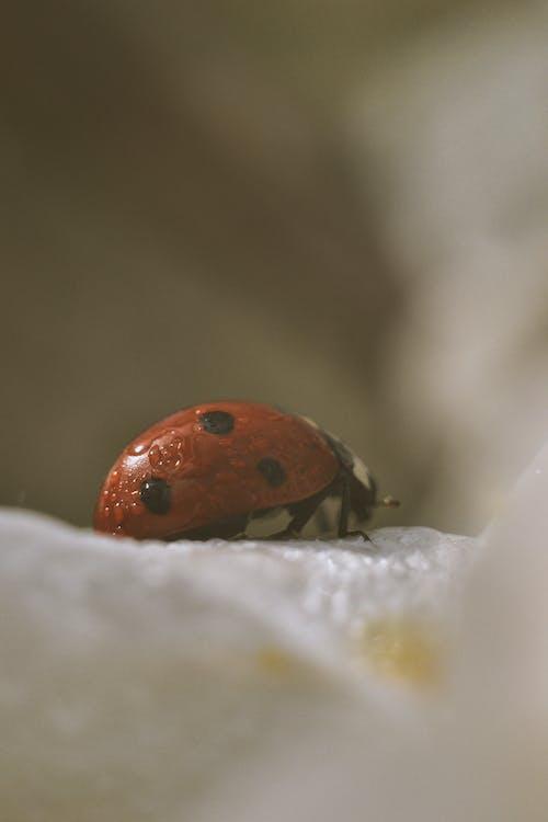 Ảnh lưu trữ miễn phí về #thiên nhiên, ảnh macro, bọ rùa, mẹ Thiên nhiên