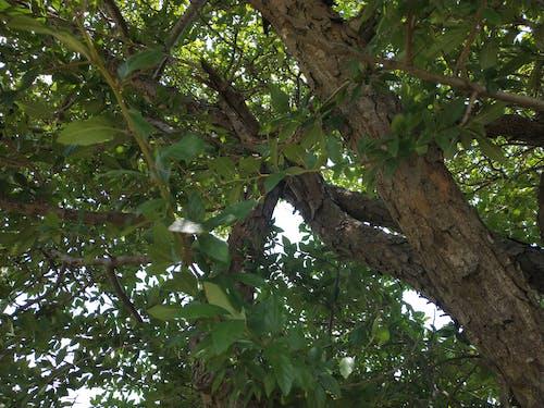 Ilmainen kuvapankkikuva tunnisteilla puu, ruskea tausta, vihreä