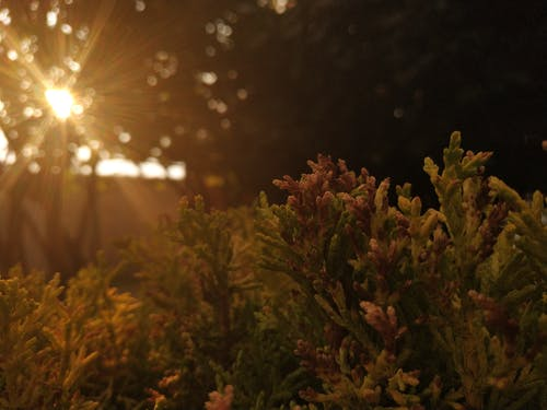 Ilmainen kuvapankkikuva tunnisteilla himmeä valo, luono
