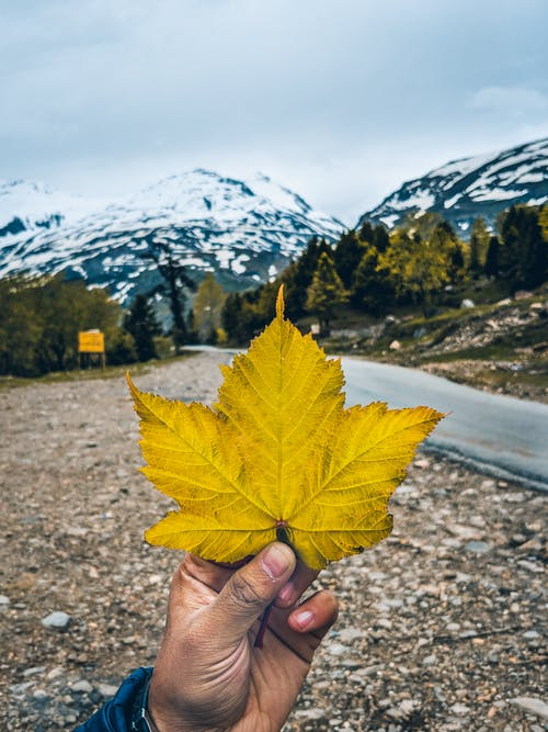 Fotos de stock gratuitas de bokeh, carretera, hoja de arce, montañas